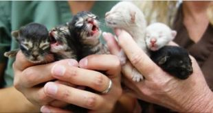 6 Kittens Saved After Being Left In A Dumpster.