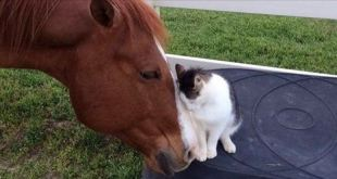 Cat Has Adored His Horse Buddy Since He was a Kitten