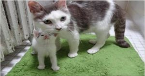 Rescue Mama Cat and Her Babies Help a Tiny Motherless Kitten