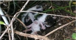 She Found 3 Kittens In A Bush. But Then She Takes A Closer Look and Realizes It…