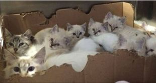 Two Cat Mamas and Their Seven Kittens Found in a Mobile Home Park