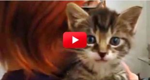 You Won't Believe The Sound That Comes Out Of This Tiny Kitten! Crazy!