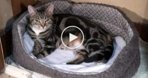 Cute Cat Giving Birth To 6 Sweet Tiny Kitties