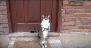 He Wants To Come Inside, So He Does This With His Paws!