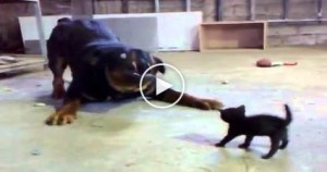 Brave Tiny Kitty AGAINST Big Dog…. AMAZING..