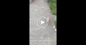 They Were Walking Along Their Neighborhood, When This Little Kitten Decided To Follow Them..
