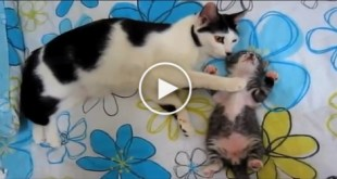 Cat Mom Noticed her Sweet Baby Kitten Has a Really Bad Dreams.. Watch What Happens Next