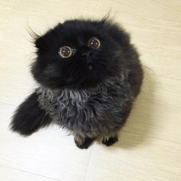 black-kitty-5