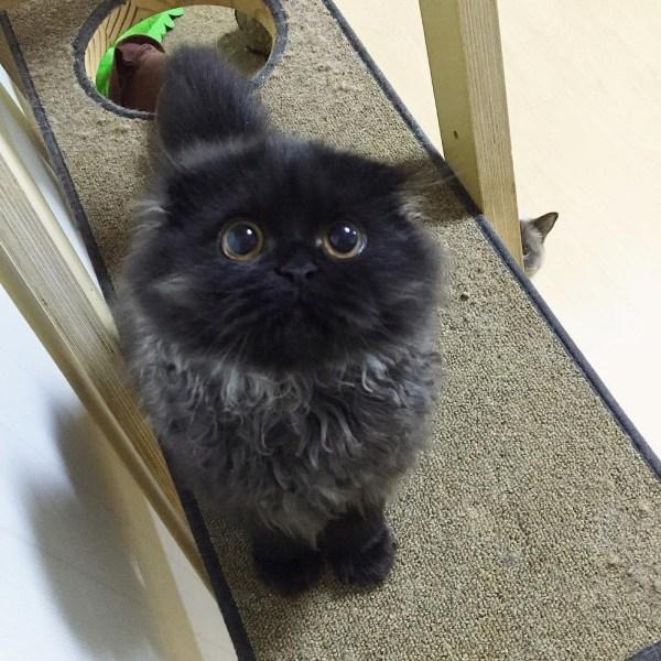 black-kitty-6