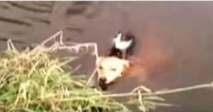 This Helpless Cat Was Drowning in a Deadly River When an Unlikely Rescuer Appeared!
