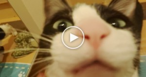 Really Excited Cat Seeing Her Human After 3 Days. Amazing Reaction