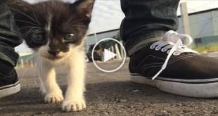 Wonderful Stray Kitty Follows Human Everywhere