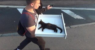 When They Found This Kitty, They Thought He Is Dying. But, What Happens Next is Miraculous