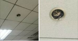 Priceless Moment Office Staff Noticed They're Being Spied On By A Cutest Kitten