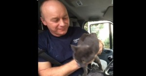 Cat Luckily Survived a 45-mile Road Journey On The Roof Of a Van