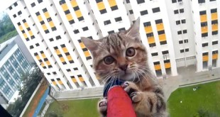 DRAMATIC Kitten Rescue From a 12Th Story Ledge