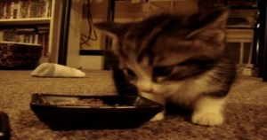 "Adorable Kitty Saying "" YUM YUM "" While Eating. HILARIOUS Reaction"