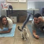 Read Why The Cat Yoga Is A Thing Now, The Reason Is Heartwarming