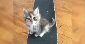 Stray Kitty Comes Up to Guy, Takes Over His Skateboard and Heart. One Year Later Amazing Transformation.