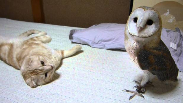 Kitty And Barn Owl Are The Best Friends. Heartwarming VIDEO !