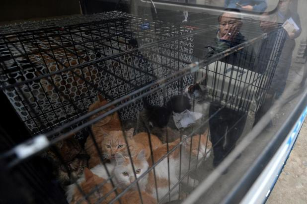 'Pet Lover' Turns Out To be a Cruel Cat Murderer who Killed 100 Cats Per Day