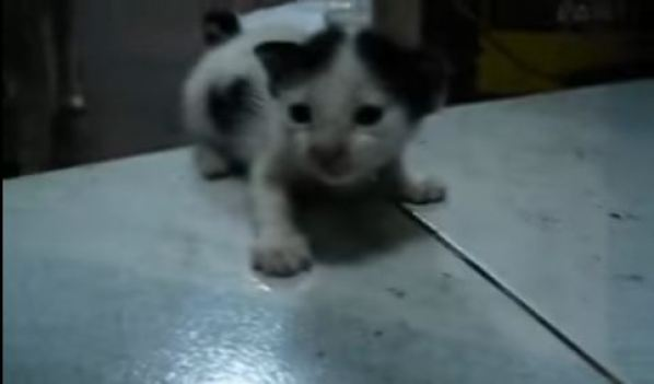 Someone Left Cute Kittens On Doorstep of This Kind family...