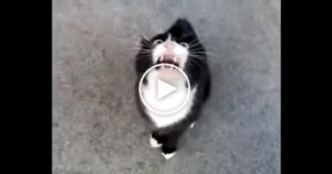 Possessed  Cat Speaking With A Scary Demonic Voice . Must WATCH !