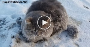 Lucky Cat is Rescued After Get Frozen To The Ground On -35C