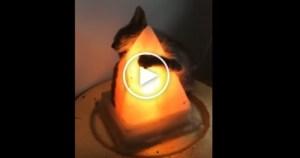 Cute Kitten Hugging a Warm Lamp. Heartwarming Video !