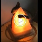 Cute Kitten Hugging a Warm Lamp. Heartwarming Video !