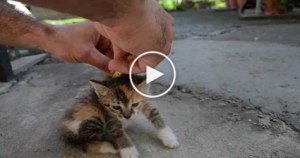 How To Deactivate Your Kitty ? I`ve Never Seen This Before ! Shocking !
