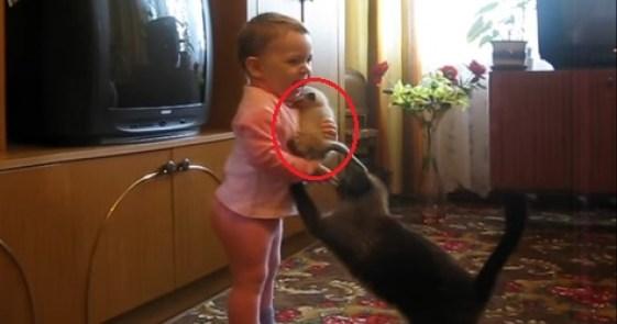 Little Kid Grabs a Newborn Kitten, Watch The Cat Mom`s Reaction