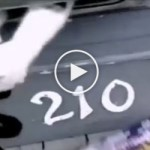 Mailman Terrorized by Angry Kitty While Trying to Deliver Mail. HILARIOUS !
