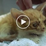 This Is The Saddest Kitten You`ve Ever Seen… But, See The Amazing Transformation !