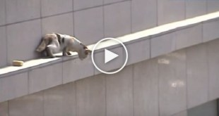 Cat Stuck on Ledge Dramatically Jumped From Third Floor