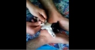 This Guy Gave Massage to Kitten`s Paralyzed Legs...Then Miracle Happens