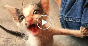 Kind People Rescued a Very Scared Abandoned Kitten. Amazing Transformation !