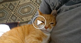 11 Sure Signs Your Kitty is Happy