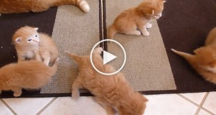 6 Tiny Kittens Learning To Walk For The First Time