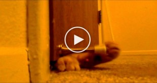 This Kitty Is Waking Up His Owners Every Morning at 5:00 With This Trick