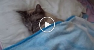 Man Came From Work And Found His Cat Sleeping In Bed Like a Real Human