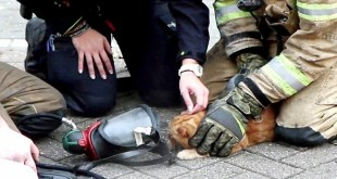 Firefighters Rescued a Cat from Burning Building With Oxygen Mask