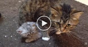 Mom Cat Guarding Her Tiny Kitten. Precious moments !
