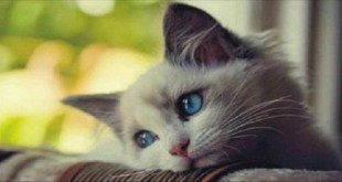 10 Typical Things Cat Owners Do That Can Break a Cat's Heart and Its Spirit …