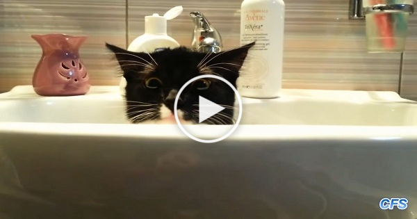 Cats Who Desperately Need Some Privacy !