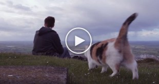 Guy Took His Rescue Kitty On A Mountain. But Wait Till You See The Kitty`s Eyes…