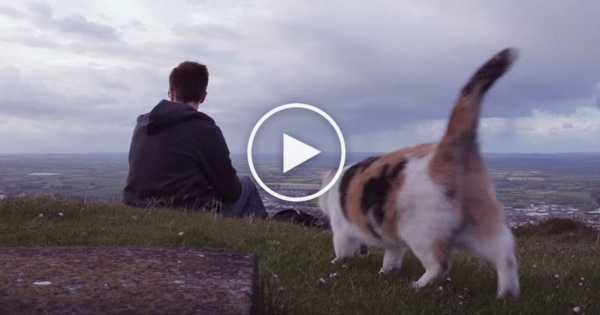 Guy Took His Rescue Kitty On A Mountain. But Wait Till You See The Kitty`s Eyes …