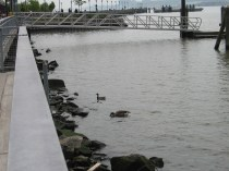 West Harlem Piers Park