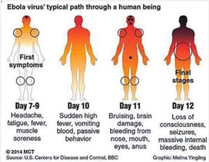 ebola harlem