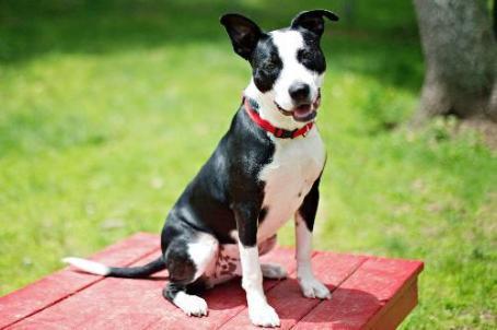 harlem-the-husky-dog-picture-1-54dd3230c7326d44d000001f